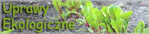 Uprawy ekologiczne